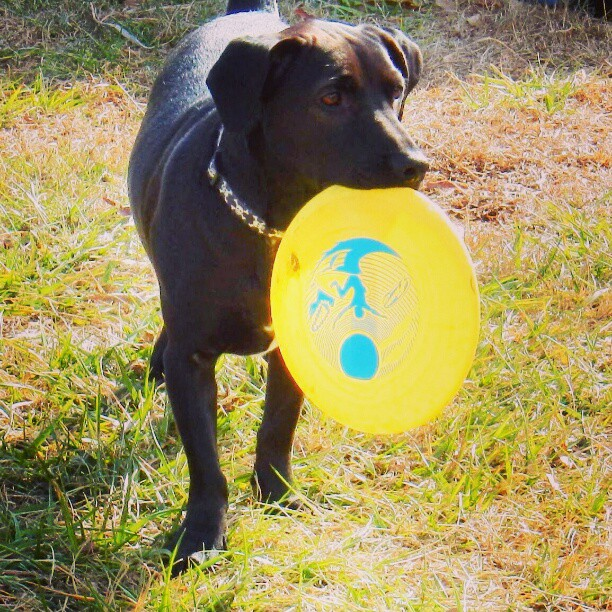 Caught the Frisbee! #instaanimalct