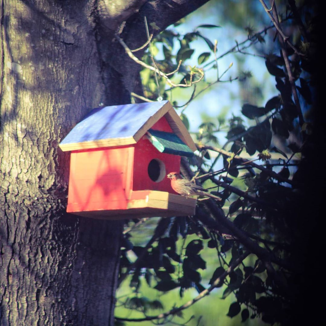 a small bird perches on the porch of a birdhouse hanging in a tree